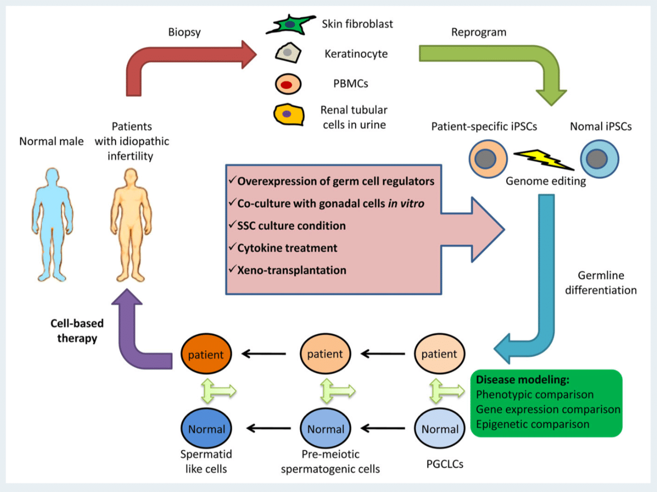 Human induced pluripotent stem cells and male infertility: an overview of current progress and perspectives.